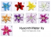 Hyacinth-Colors