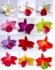 Cattleya-S-Colors